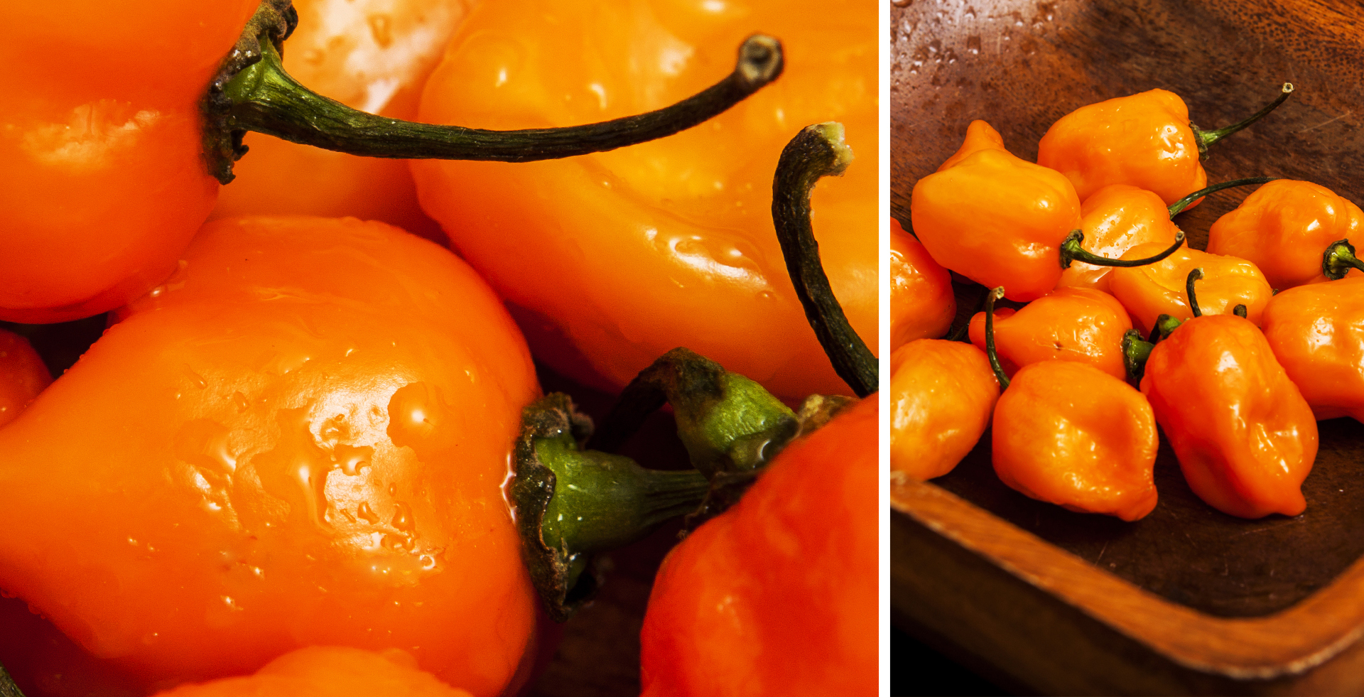 orange_bell_peppers_rcfdistributors